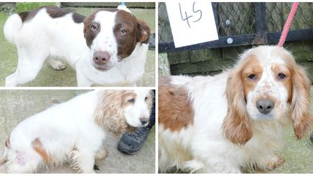 The dogs recovered after a 10 hour search of the West Meadow travellers site in March