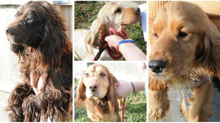 The dogs were recovered nearly a month ago from a traveller site