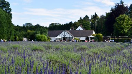 View from lavender fields of The Swettenham Arms in Swettenham
