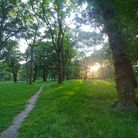 Trees line a solitary dirt path through a green wood. The sun blazes through the trees as it goes down