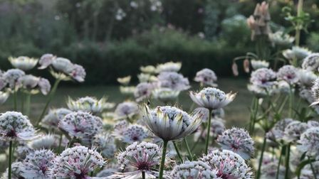 Flowers in The White Garden at Brockholds Manor, Herts