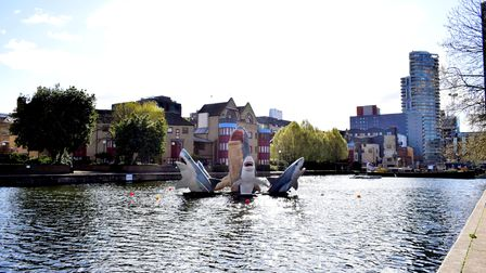 The sharks were installed at Islington Boat Club to celebrate its 50th anniversary.