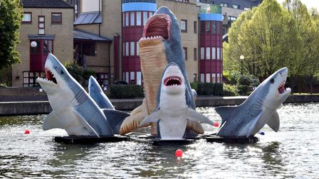 Jaimie Shorten's sharks now installed at City Road Basin.