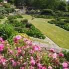 A spray of pink flowers overlook a long lawn stretching into the distance with a fountain in its centre