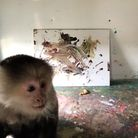 World famous monkey and artist, Pockets Warhol.