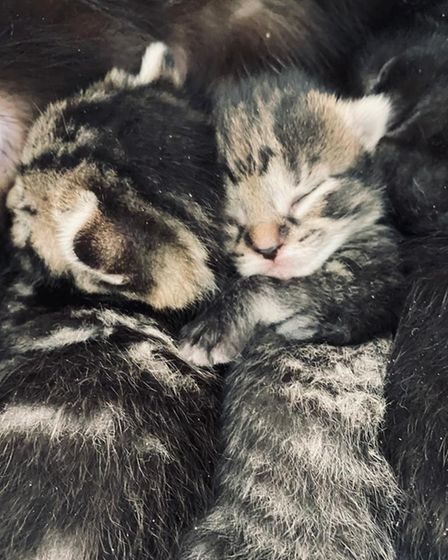 Feline Friends London helps people adopt or foster rescued cats like this pair of kittens.