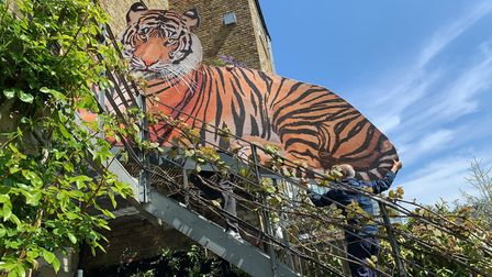 Installing the giant Tiger artwork outside Ahmed Farooqui's house in Crouch Hill