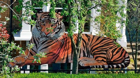 The Tiger has replaced the Hares outside artist Ahmed Farooqui's house in Crouch Hill