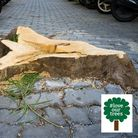 A stump: The part of a tree trunk left protruding from the ground after the tree has has been felled