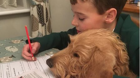 A brown labradoodle helping boy with homework