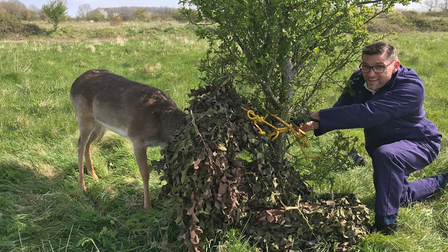 The deer was cut free by the RSPCA at Carver Barracks, Saffron Walden