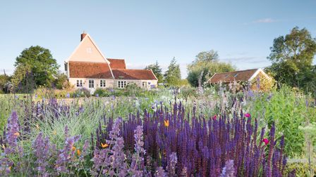 Salvia 'Caradonna' and Nepeta grow with mixed Campanulas and Linaria to the side of the house in the