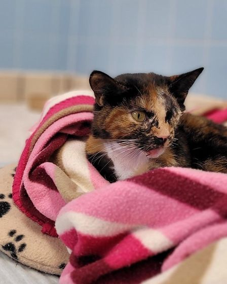 Trudie the cat on April 25 wrapped in her pink blanket with her beige heat pad underneath