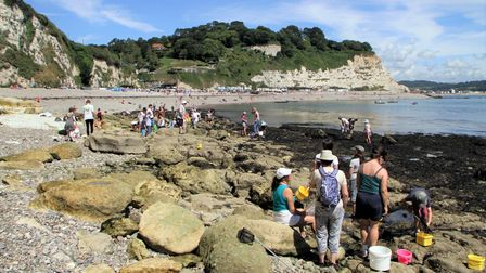 Rock pooling at Beer beach. Picture by Alex Walton. Ref shs 0028-32-13AW. To order your copy of this