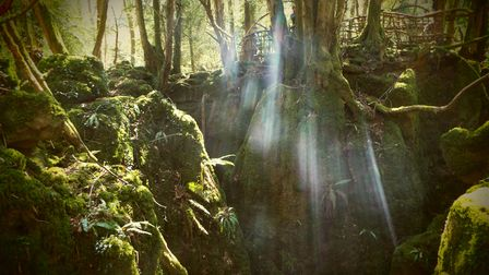 Puzzlewood, Forest of Dean, Gloucestershire