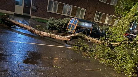 The tree straddled across the street