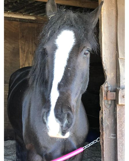 Bond was one of two horses killed in Sunday morning's fire