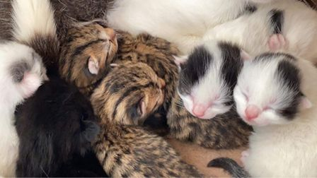 The three kittens rescued in Burnham Market (the brown ones)
