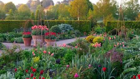Tulipa 'Kingsblood' in small containers and Tulipa 'Queen of Night' with Tulipa 'Dordogne' in large
