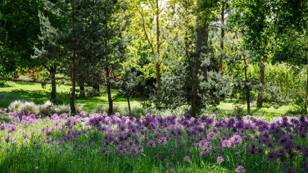 Stunning landscape in the meadow at RHS Garden Wisley, Woking, Surrey, England.