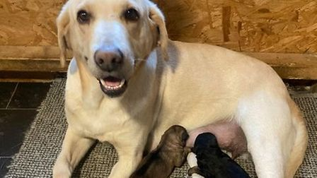 Dog with new puppies