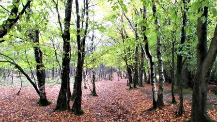 The deciduous woodlands and leaf colour of the Blackdowns are very indicative of the changing seasons