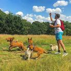 Professional dog walkers use Hampstead Heath every day