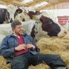 A dairy farmer sat down and leaning against one of his cows.