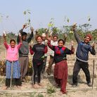 A group of workers planting saplings