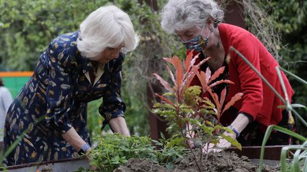 The Duchess of Cornwall helps to plant a shrub with Kate Green at the WhittingtonHospital