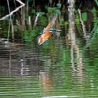 Stuart Buckminster took this stunning shot of a Kingfisher at the riverside in St Neots.