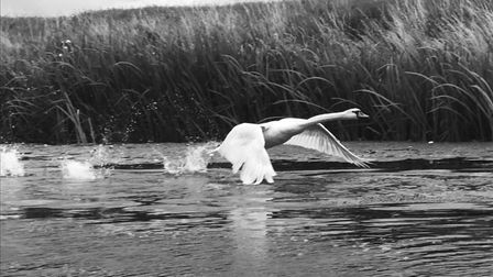 Steve Cracknell took this on the Forty Foot drain at Ramsey.