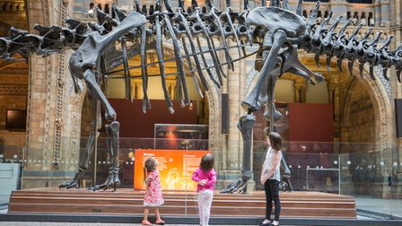 Dippy the Dinosaur is coming to Norwich.