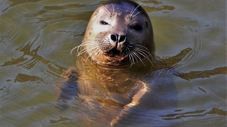 Martin Clarke has been capturing various photos of riverside wildlife in Norwich duringthe past year