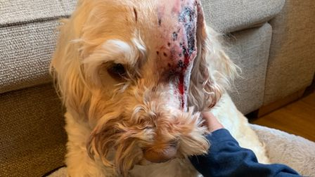 More than £1,000 has been raised to cover vet costs after Waffle the dog was shot in the face in Emneth.