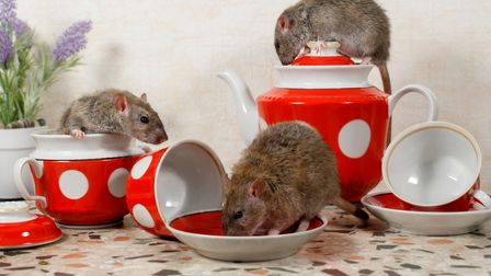 How to get rid of mice from your home using Inoculand Pest Control Services in London