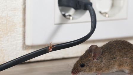 Mice damaging electrical wires after infesting a London residential home.