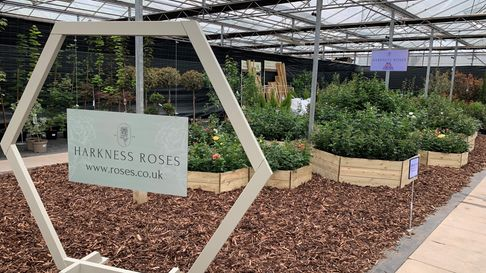 Harkness Roses open their virtual Chelsea Show stand to the public at their new rose store in Upper Caldecote, Beds
