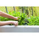 Woman hands collecting herbs in home garden