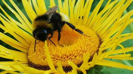 Elisabeth Wolmarans sent us this image of a bumble bee in her garden.