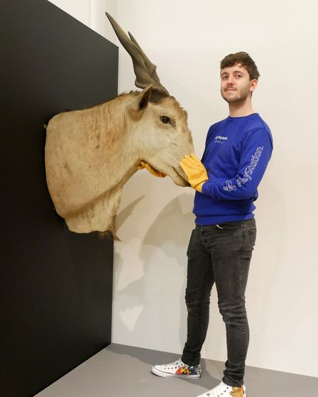 New Collections volunteer Harry posing with a very heavy eland trophy head.