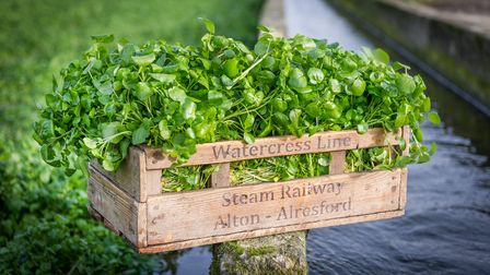 Dorset and Hampshire are ideal locations for growing watercress