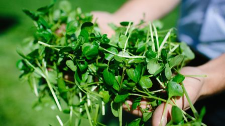Watercress is packed with health boosting phytochemicals
