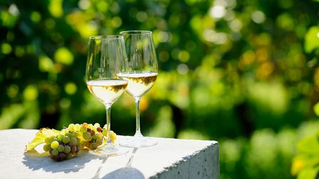 Wine and grapes in vineyard