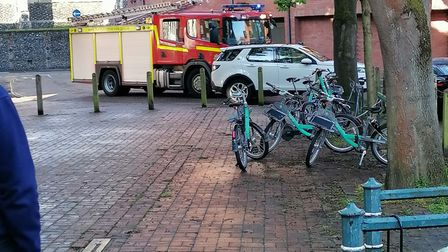 Firefighters in Coslany Square in Norwich helping a deer which had got stuck by the river Wensum