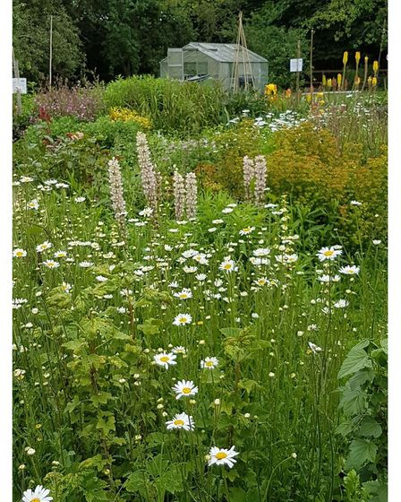 """""""Growing People is the only place where I feel safe and where I know I can be myself,"""" aGrowing People gardener said"""