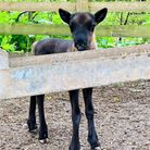 The new baby reindeer at Jimmy's Farm and Wildlife Park, near Ipswich