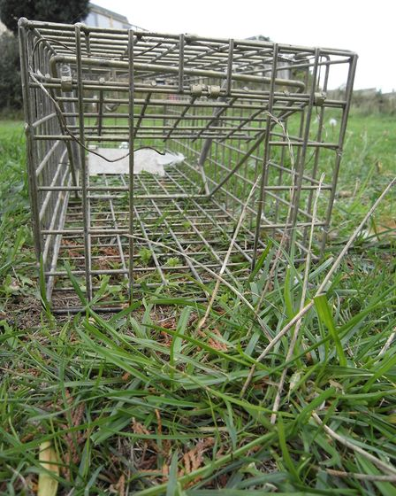 A live trap for rats and mustelids