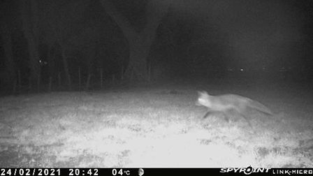 Trail cams are an invaluable tool in the fight against predators and pests