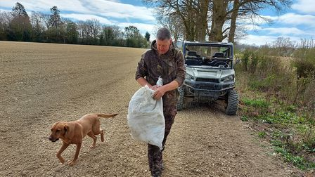 Hanging white sacks from some trees in the next field over drove even more pigeons to the pattern